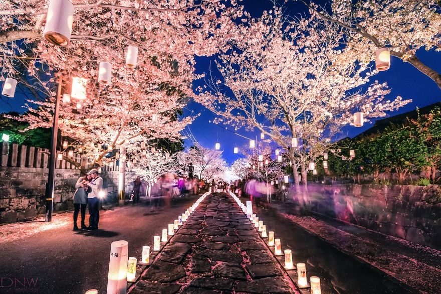 japan-especially-in-cherry-blossom-season
